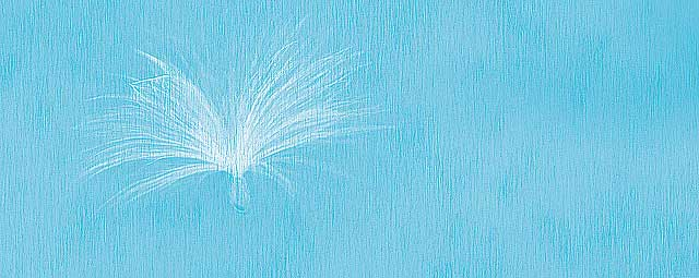 Milkweed Seed Sign of Angels Presence